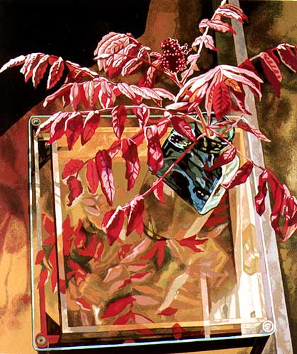 Jane Goldman - Prints - Sumac on Glass