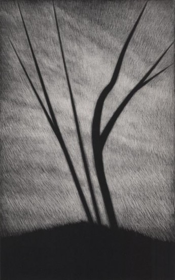 Robert Kipniss - Mezzotints - Strong trees in the wind