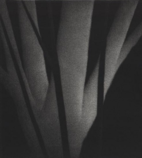 Robert Kipniss - Mezzotints - The life of trees at night