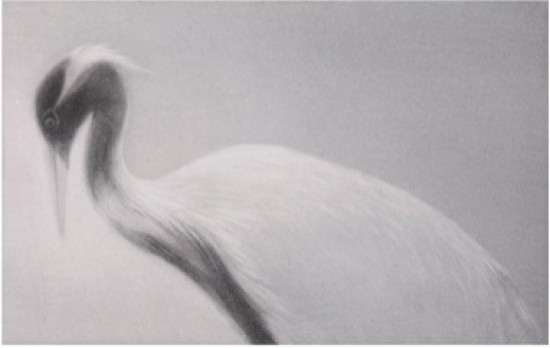 Mikio Watanabe - Feathered Light I