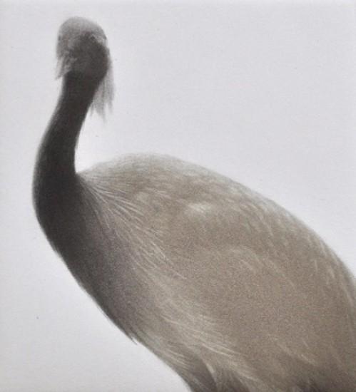 Mikio Watanabe - Feathered Light II